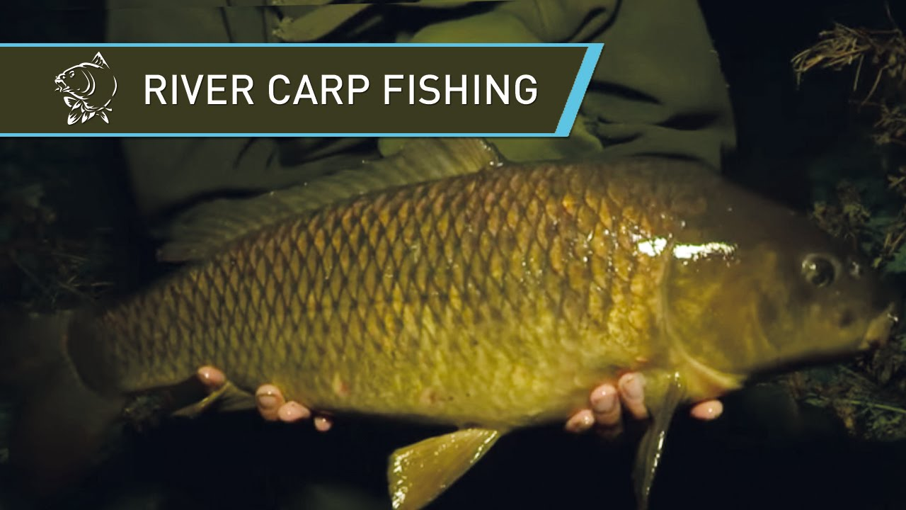 Carp Fishing on the River with Oli Davies - Nash Tackle