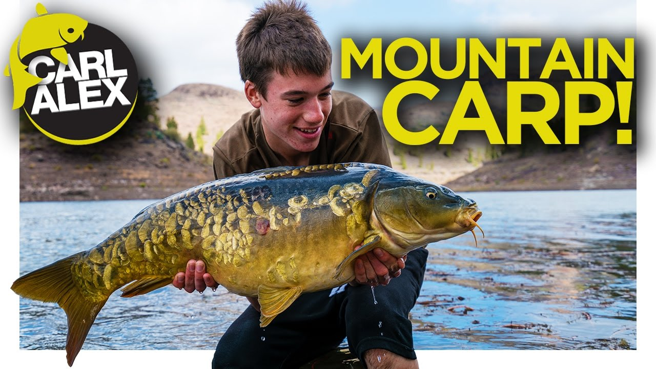 CARP FISHING in the MOUNTAINS of Gran Canaria