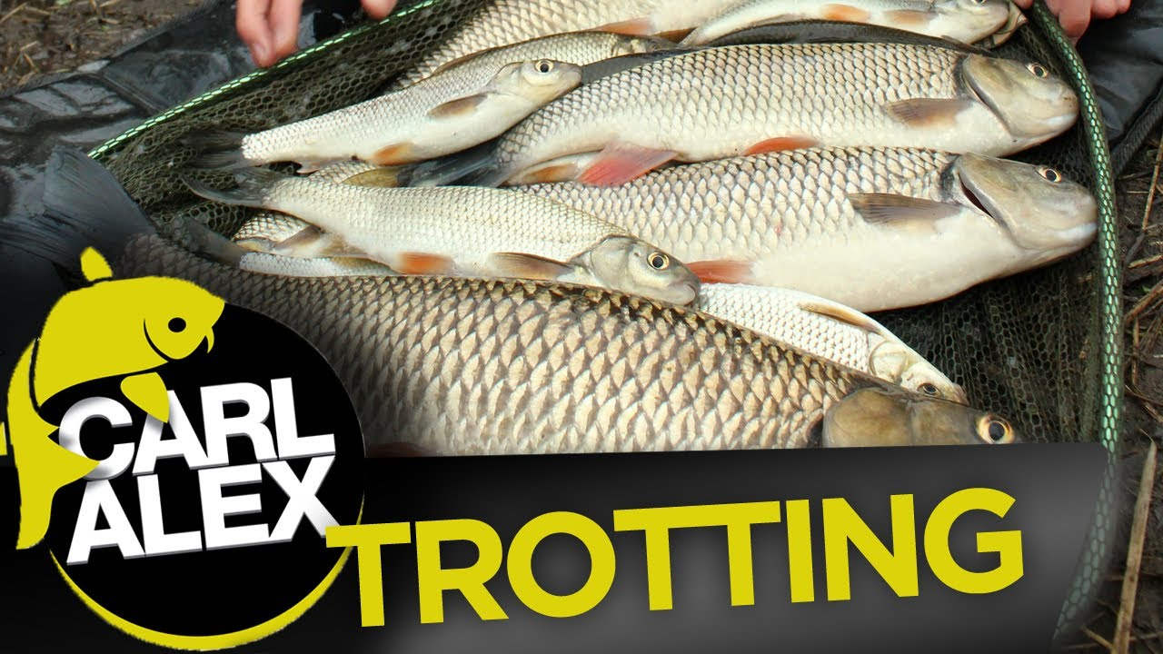 Fishing for Chub and Dace on the float