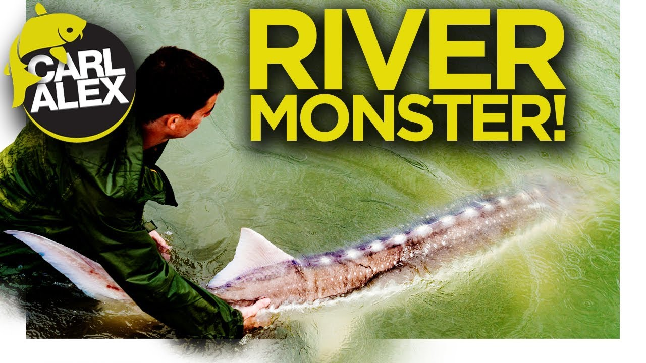 FISHING FOR RIVER MONSTERS - Giant River Sturgeon