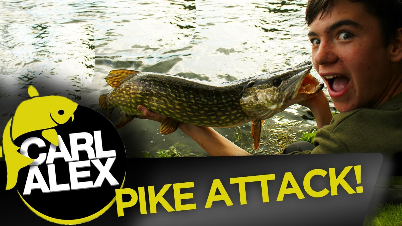 PIKE ATTACK - Lures and Spinners