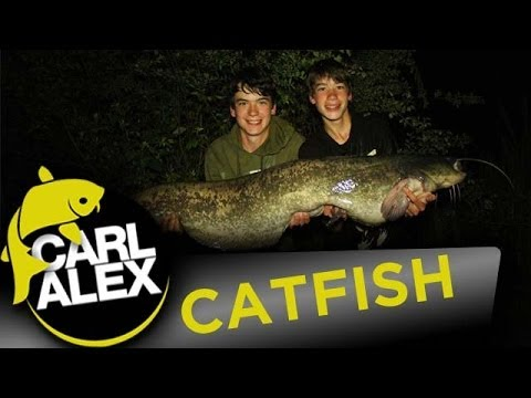 QUEST FOR A UK CATFISH