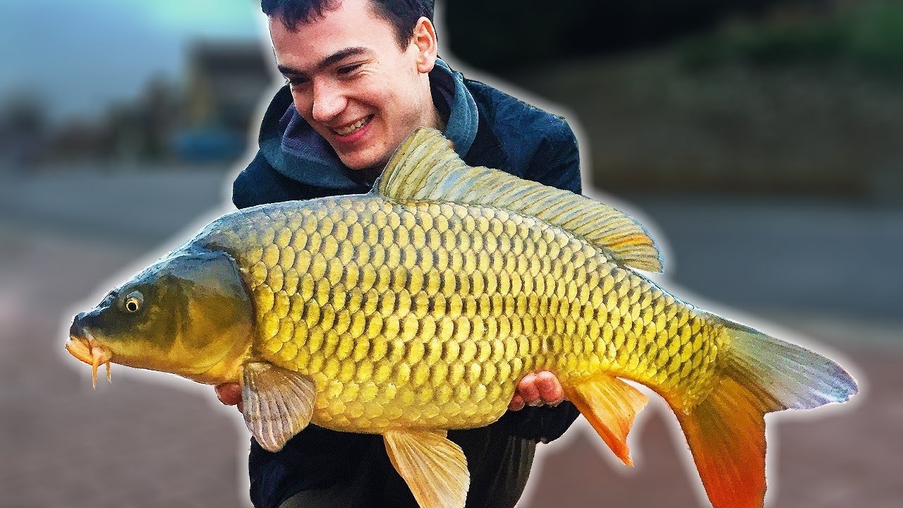 RIDICULOUS carp fishing action at the village pond !